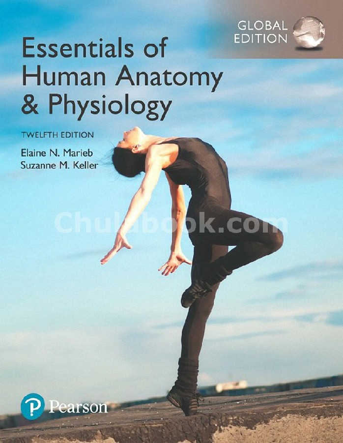 ESSENTIALS OF HUMAN ANATOMY AND PHYSIOLOGY (GLOBAL EDITION)